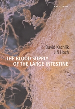 The blood supply of the large intestine